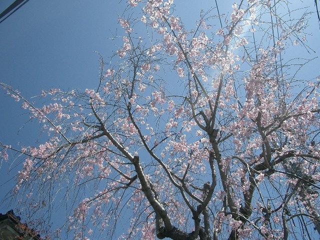 2011_0413_104456cimg0303