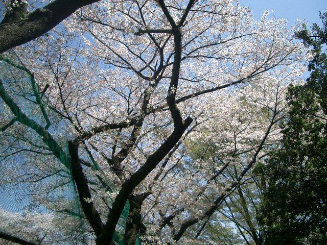 2011_0413_110034cimg0312