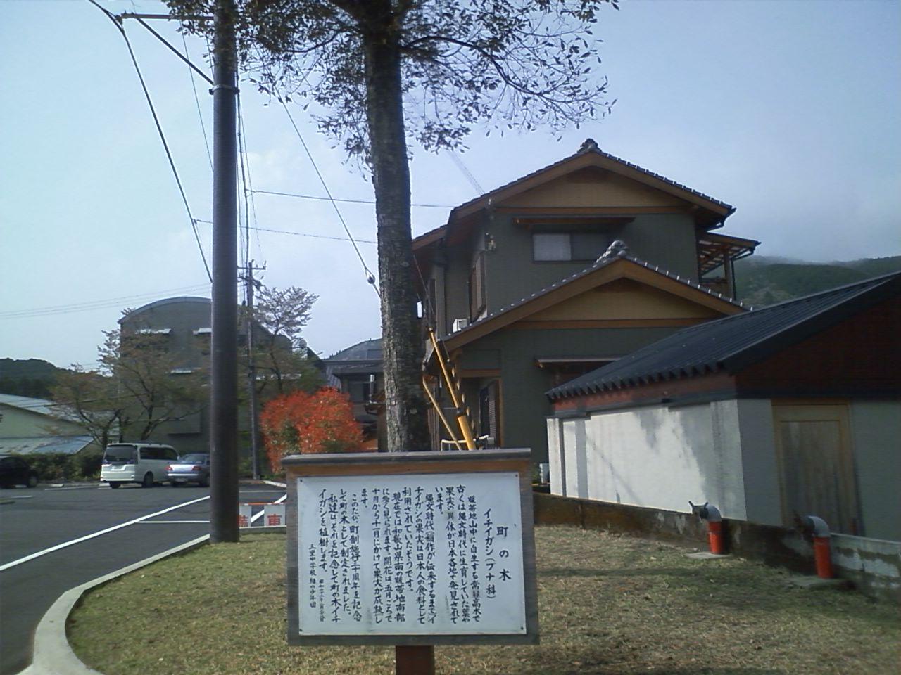 熊野本宮大社へ、イチイガシの木