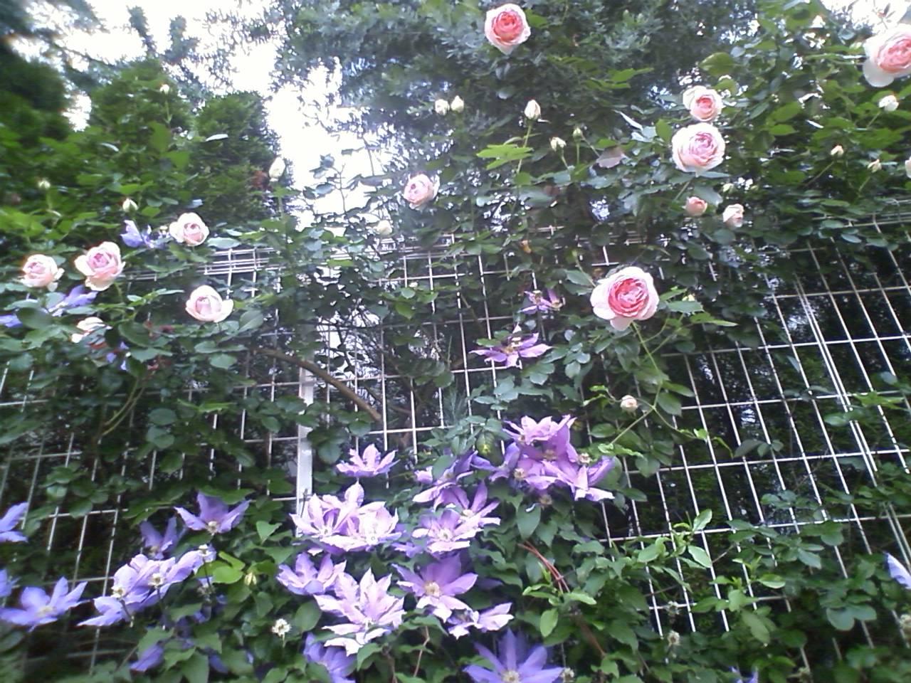 薔薇と鉄扇